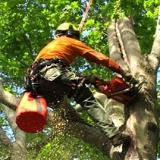 Devid tree services comapany