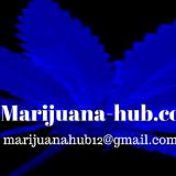 marijuanahub12