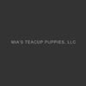 Mia's Teacup Puppies LLC